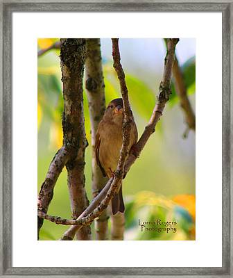 Safe Refuge Framed Print