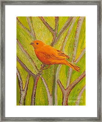 Saffron Finch Framed Print