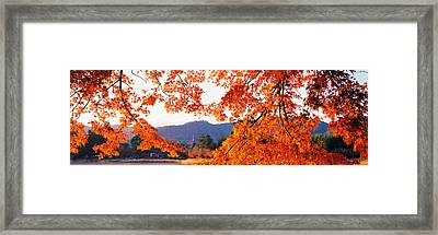 Sagano Daikaku-ji Ousawa-no-ike Kyoto Framed Print by Panoramic Images