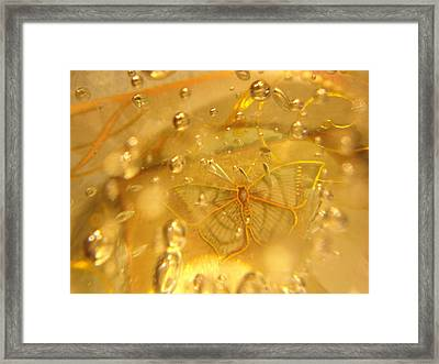 Sage Butterfly With Bubbles Framed Print