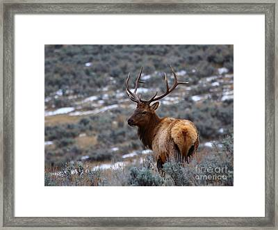 Sage Elk Framed Print
