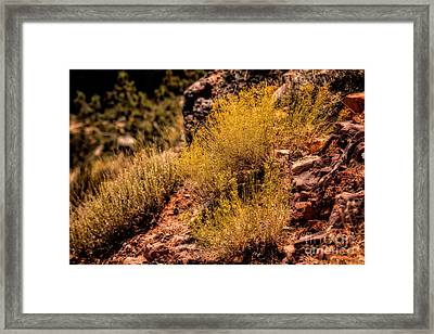 Sage Framed Print by Jon Burch Photography