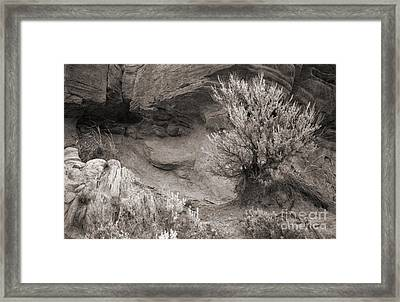 Sagebrush On Polecat Bench Framed Print by Janeen Wassink Searles