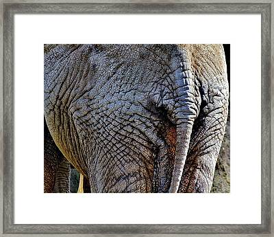 Saggy Baggy Framed Print by Benjamin Yeager