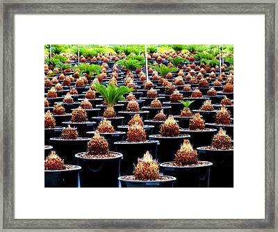 Sago Abstract Framed Print