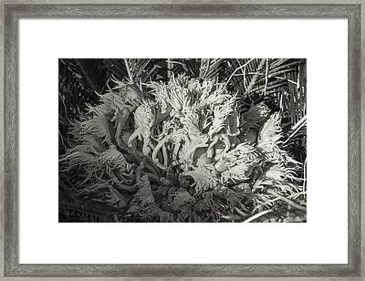 Sago Babies 1 Black And White Framed Print by Scott Campbell