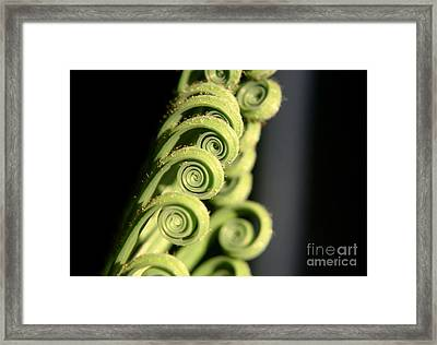 Sago Palm Leaf - 3 Framed Print by Kenny Glotfelty