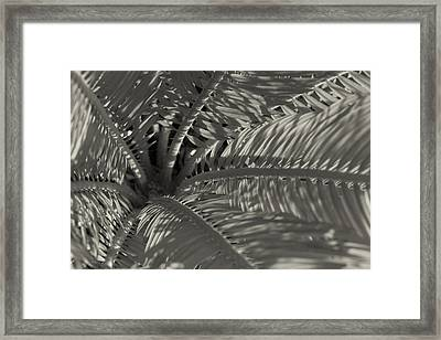 Sago Symmetry 1 Black And White Framed Print by Scott Campbell
