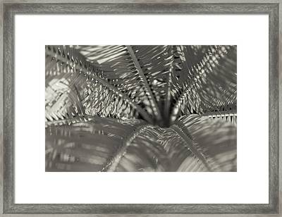 Sago Symmetry 2 Black And White Framed Print by Scott Campbell