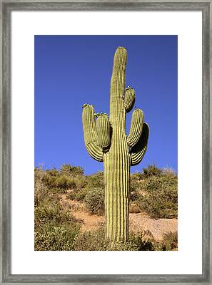 Saguaro - A Cactus With Personality Framed Print by Christine Till