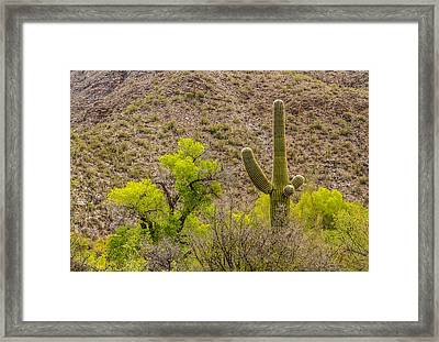 Framed Print featuring the photograph Saguaro And Cottonwood by Beverly Parks