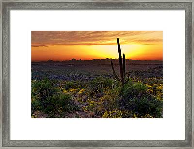 Saguaro And The Setting Sun Framed Print