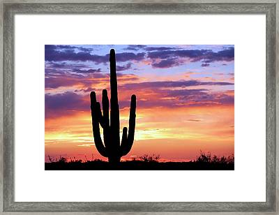 Framed Print featuring the photograph Saguaro At Sunset by Elizabeth Budd