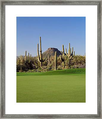 Saguaro Cacti In A Golf Course, Troon Framed Print by Panoramic Images