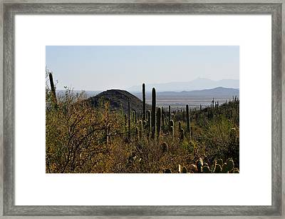 Framed Print featuring the photograph Saguaro Cactus And Valley by Diane Lent