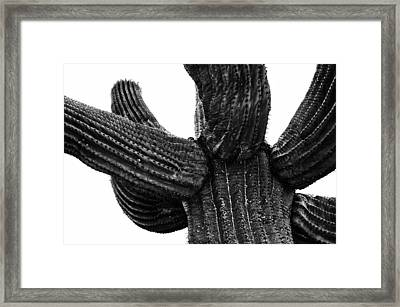 Saguaro Cactus Black And White 3 Framed Print