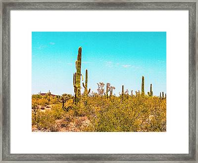Saguaro Cactus In Organ Pipe Monument Framed Print by Bob and Nadine Johnston