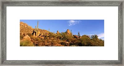 Saguaro Cactus, Sonoran Desert Framed Print by Panoramic Images