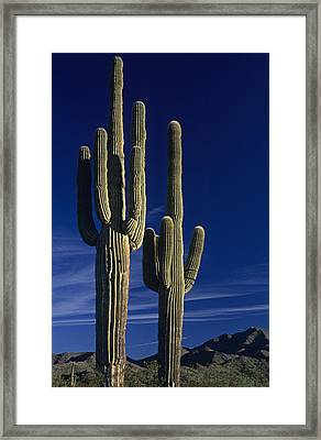 Saguaro Cactus Sunset Arizona State Usa Framed Print