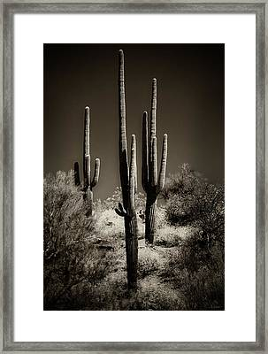 Saguaro Cactus Trio In Sepia Framed Print by Gary Cain