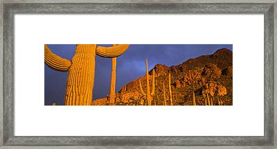 Saguaro Cactus, Tucson, Arizona, Usa Framed Print by Panoramic Images
