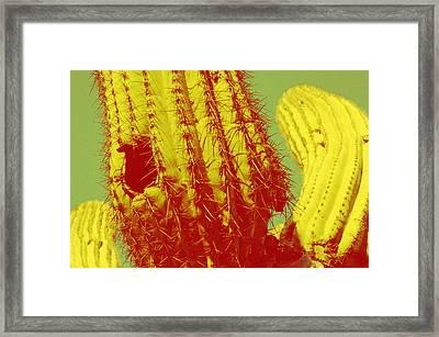 Saguaro Celebration I Framed Print by Carolina Liechtenstein