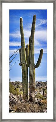 Saguaro Couple Framed Print by Kelley King