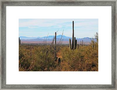 Framed Print featuring the photograph Saguaro Desert by Alicia Knust