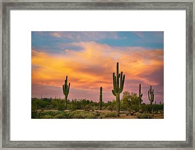 Saguaro Desert Life Framed Print