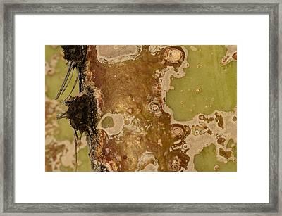 Saguaro Details I Framed Print