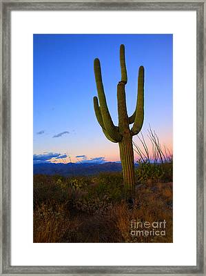 Saguaro Dusk Framed Print by Mike  Dawson