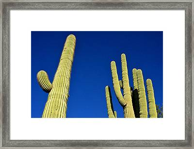 Framed Print featuring the photograph Saguaro National Forest Tucson Az by Diane Lent