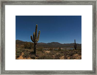 Saguaro Near Bartlett Reservoir Framed Print by Rick Berk