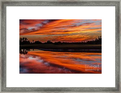 Saguaro Reflection Framed Print by Robert Bales