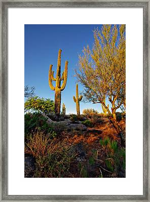 Saguaro  Framed Print by Scott McGuire