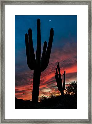 Saguaro Silhouettes Framed Print by Guy Schmickle