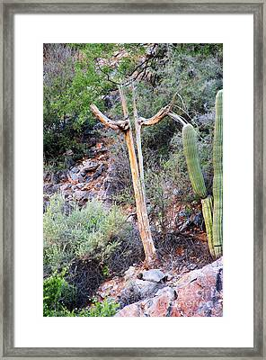Framed Print featuring the photograph Saguaro Skeleton by Jemmy Archer