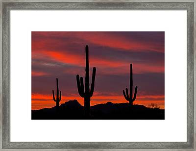 Saguaro Sunset Framed Print by Guy Schmickle