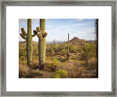 Saguaro Twins Framed Print