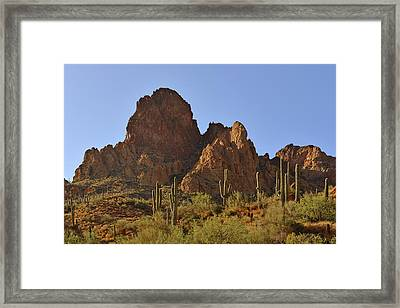 Saguaros - Symbol Of The Desert Southwest Framed Print by Christine Till