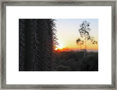 Sagurao Sunset Framed Print by Gary Kaylor