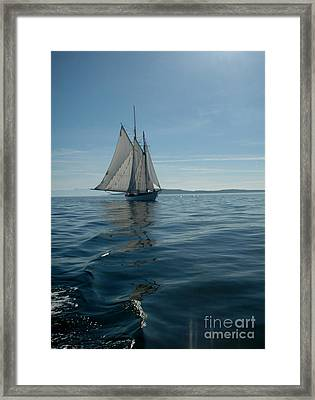 Sail The Blue Framed Print