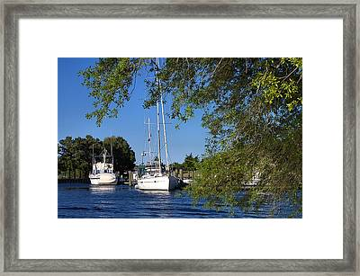 Sailboat Through Trees Framed Print