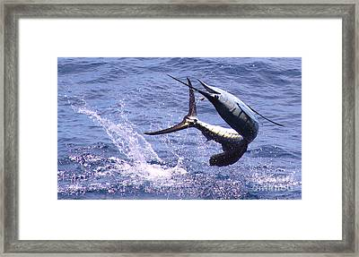 Sailfish Chaos Framed Print