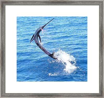 Sailfish Jump Framed Print