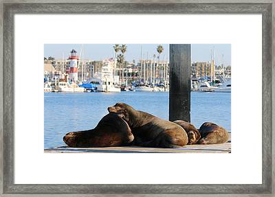 Sailing Dreams  Framed Print