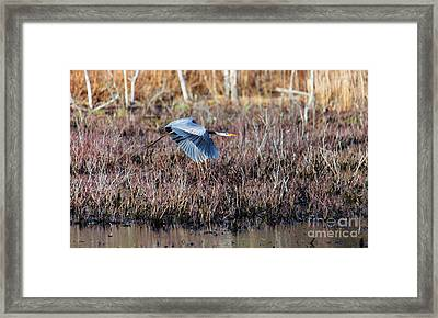 Sailing Through The Marshes Framed Print by Mary Lou Chmura