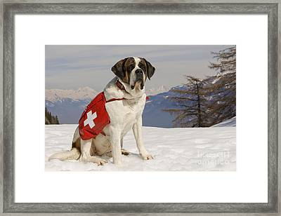 Saint Bernard Rescue Dog Framed Print by Jean-Michel Labat