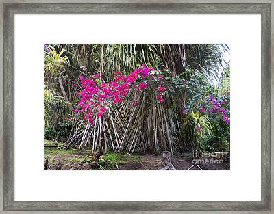 Saint Lucian Plantation Framed Print