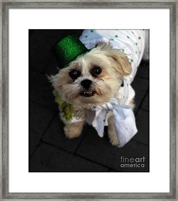 Saint Patrick's Day  Framed Print by Steven Digman
